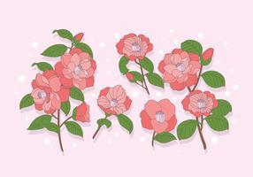 Camellia vektor
