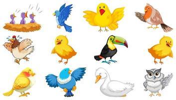 Satz von verschiedenen Vögeln im Karikaturstil lokalisiert
