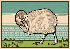 Tappning illustration av kiwi fågel