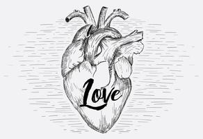 Gratis vektor hjärta illustration