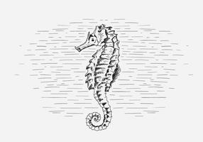 Free vector seahorse illustration
