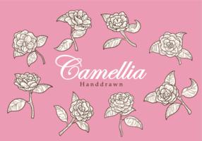Fria händer som dras Camelliablomman vektorer