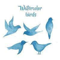 Vögel in Aquarell
