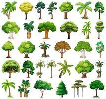 uppsättning olika växter och träd vektor
