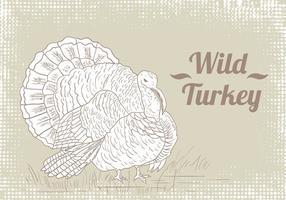 Wild Turkey Zeichnung Vektor