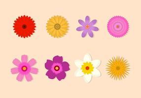 Free Flower Vektor-Sammlung vektor