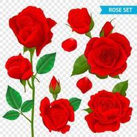 realistisches Rosenblütenknospenset vektor