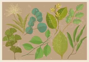 Eucalyptus och växters blad vektorer