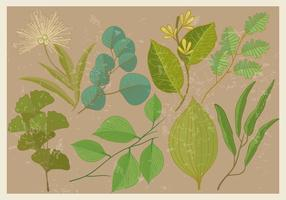 Eukalyptus und Pflanze Blatt Vektoren