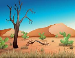 öken med sandberg och kaktus