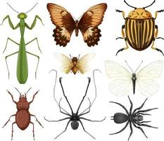 olika insekter samling isolerade