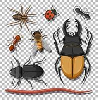 Satz von verschiedenen Insekten auf transparentem Hintergrund
