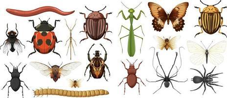 Sammlung verschiedener Insekten isoliert