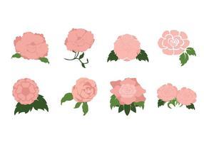 Fri Romantisk Camelliablomman vektor