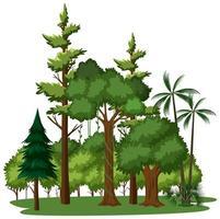 isolierte Bäume auf weißem Hintergrund vektor
