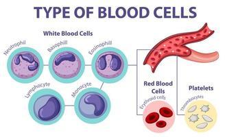 typ av blodceller