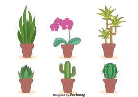 Zimmerpflanze Sammlung Vektor
