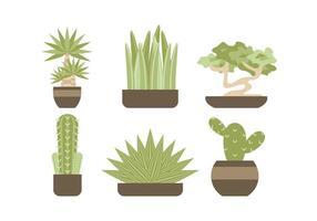 Kostenlose Evergreen Zimmerpflanze Vektoren