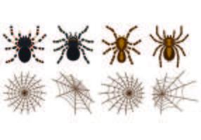 Set Tarantuala Vektoren