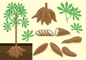 Cassava Freie Vektoren