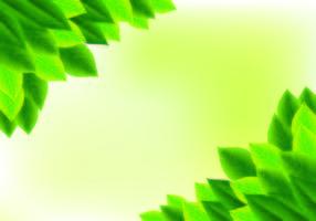 Hintergrund der natürlichen Grün-Blätter vektor