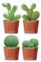 uppsättning kaktus i en träkruka