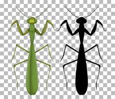 uppsättning mantis isolerade