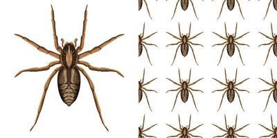 Spinneninsekt lokalisiert auf weißem Hintergrund und nahtlos