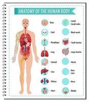 anatomi av människokroppen infographic vektor