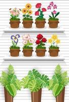 Pflanzen in Regalen