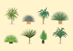 Yucca Pflanze Vektoren