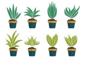 Fri Yucca Växt Ikoner vektor