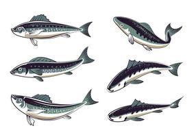 Ställ färska sardiner Hand Drawn Style vektor