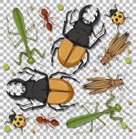 uppsättning olika insekter