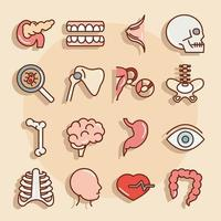 människokropps anatomi och hälsa ikonuppsättning