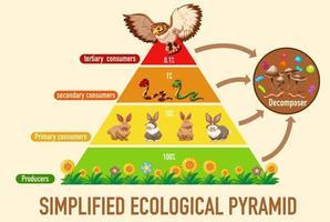 vetenskap förenklade ekologisk pyramid vektor