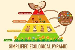 Wissenschaft vereinfachte ökologische Pyramide vektor