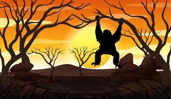 apa på trädgren vid solnedgången