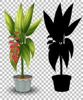 uppsättning växter i kruka