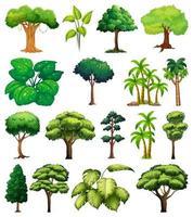 uppsättning av olika träd vektor