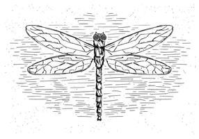 Free Vector Dragonfly Illustration
