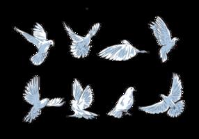 Freie Hand gezeichnete Paloma Vektoren