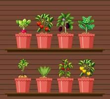 uppsättning av olika grönsaker i olika kruka på träväggshylla