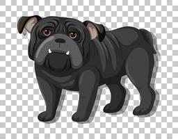 schwarze Bulldogge in stehender Position Zeichentrickfigur lokalisiert auf transparentem Hintergrund