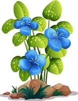 blaue Blumen mit Blättern auf weißem Hintergrund vektor
