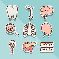 Anatomie- und Gesundheitssymbolsatz des menschlichen Körpers vektor