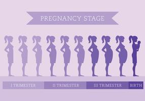 Schwangerschaft Bühne vektor