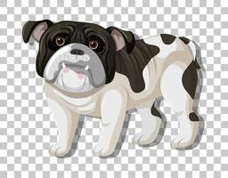 svart vit bulldog i stående positionstecknad film
