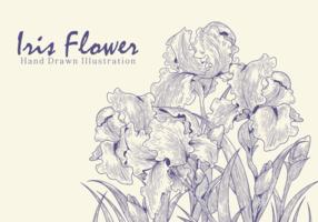 Freie Hand gezeichnete Iris-Blumen-Vektoren vektor
