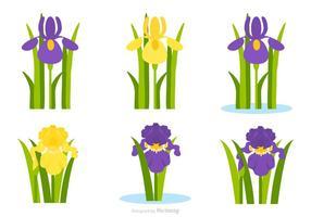 Flat lila och gult Iris Flower Vector Set